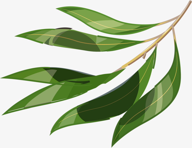 650x500 Cartoon Willow Material, Vector Willow, Cartoon Willow, Leaves Png