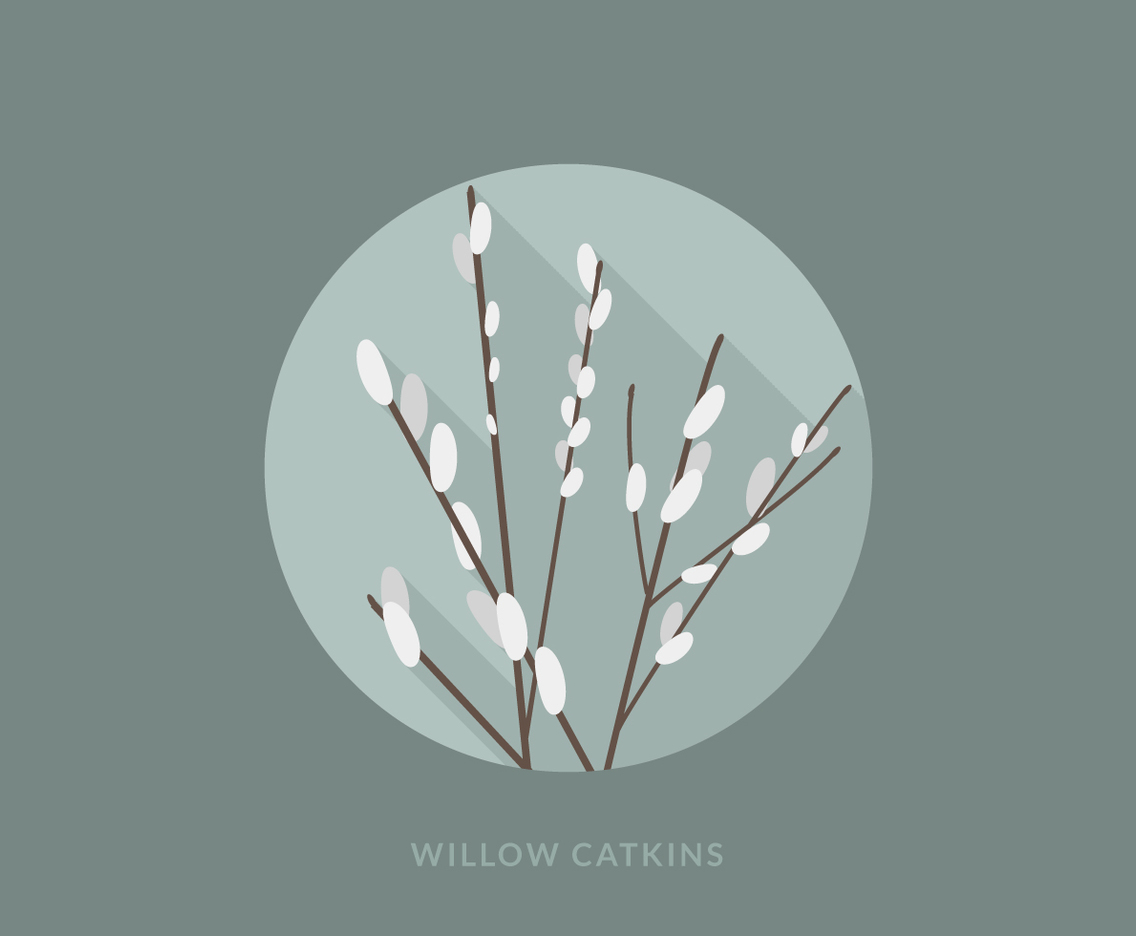 1136x936 Flat Willow Catkins Vector Art Amp Graphics