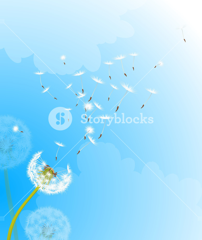 841x1000 Dandelion In The Wind. Vector Background. Royalty Free Stock Image