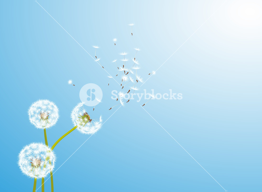 1000x734 Dandelion Glowing By The Wind. Vector. Royalty Free Stock Image