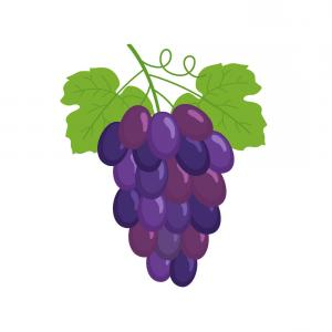 300x300 Png Common Grape Vine Wine Clip Art Grapes Vector Orangiausa