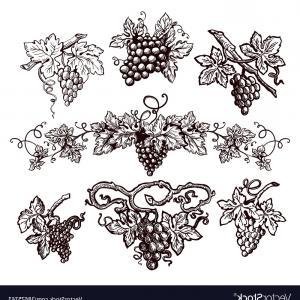 300x300 Grape Vine Vintage Sketch Icons For Wine Vector Sohadacouri