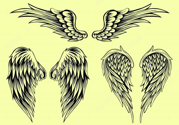 600x421 Vector Wings
