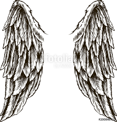 482x500 Wings. Vector Illustration On White Background. Black And White
