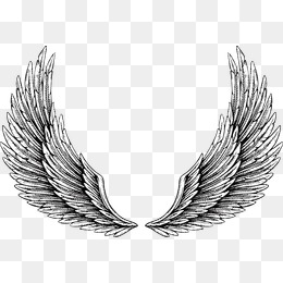 260x260 Wings Png, Vectors, Psd, And Clipart For Free Download Pngtree