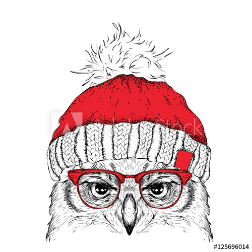 500x500 The Christmas Poster With The Image Owl Portrait In Winter Hat