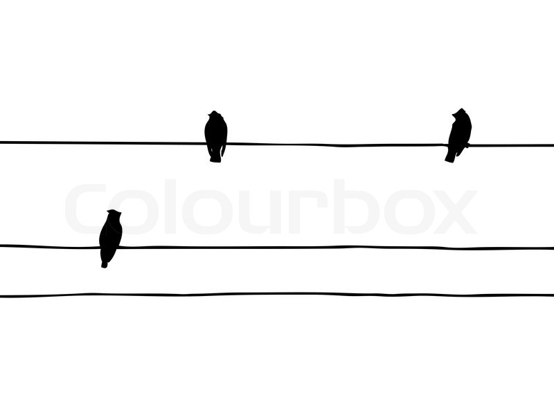 800x600 Vector Silhouette Of The Birds Of The Waxwings On Wire Stock