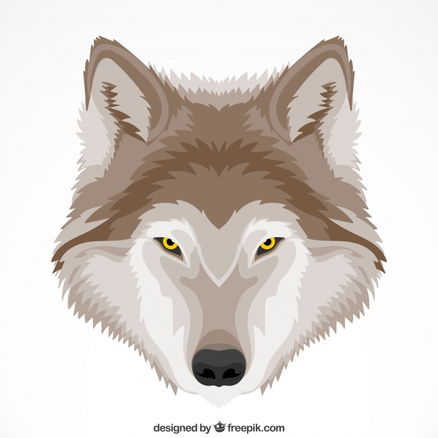626x626 Cute Wolf Background With Yellow Eyes Vector Free Download