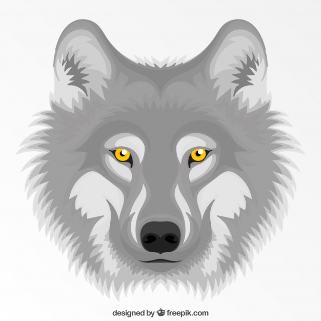 626x626 Gray Wolf With Yellow Eyes Background Vector Free Download