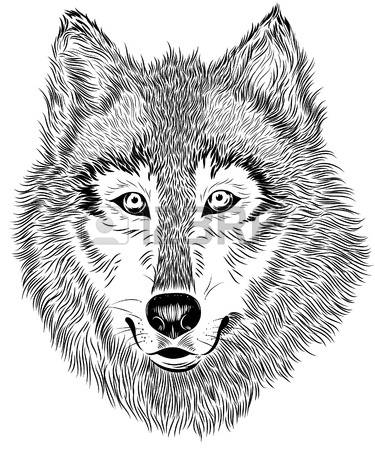 375x450 Collection Of Wolf Eyes Clipart High Quality, Free Cliparts