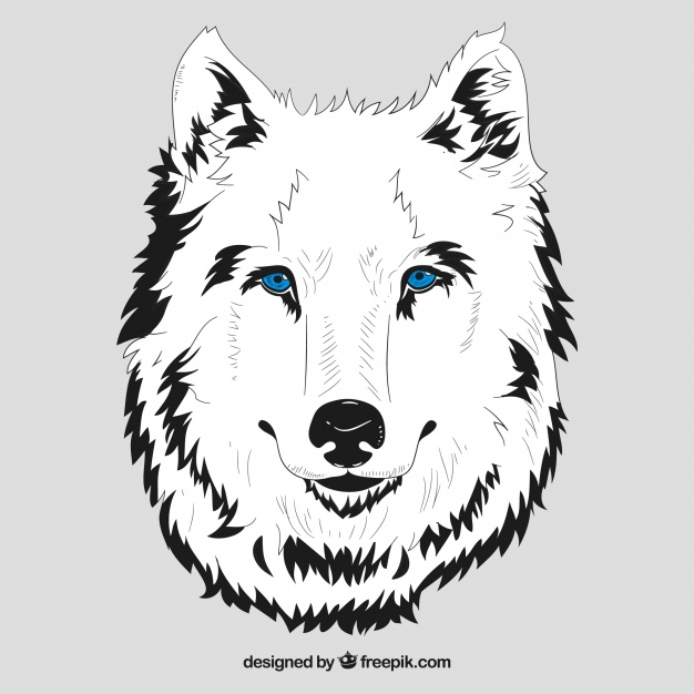 626x626 White Head Of Wolf With Blue Eyes Vector Free Download