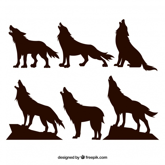 626x626 Wolf Vectors, Photos And Psd Files Free Download