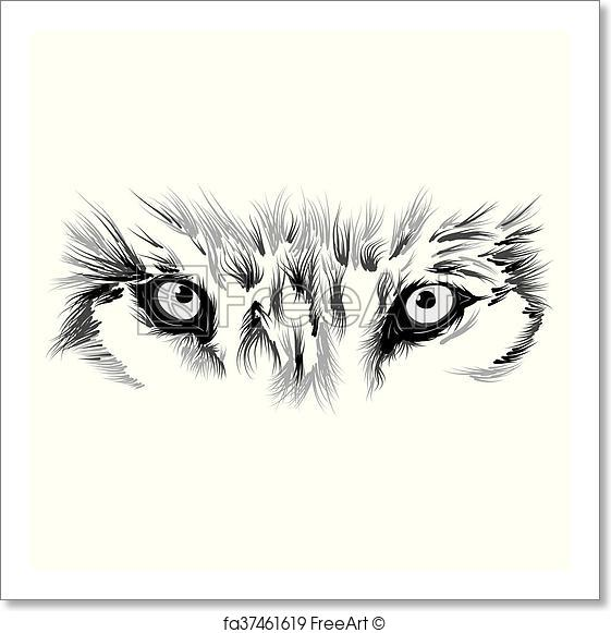 561x581 Free Art Print Of Beautiful Wolf Face. Beautiful Wolf Face. Vector
