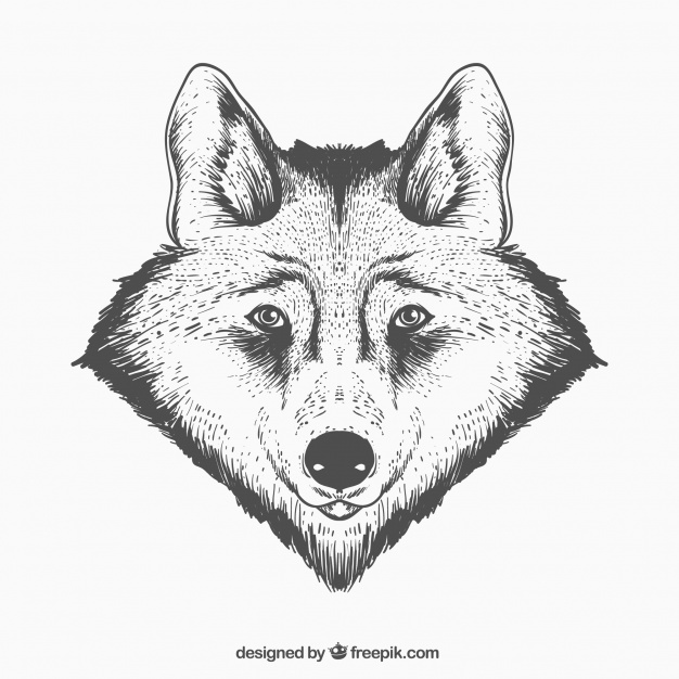 626x626 Realistic Wolf Face Vector Free Download