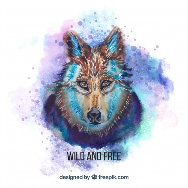 626x626 Watercolor Dangerous Wolf Face Vector Free Download