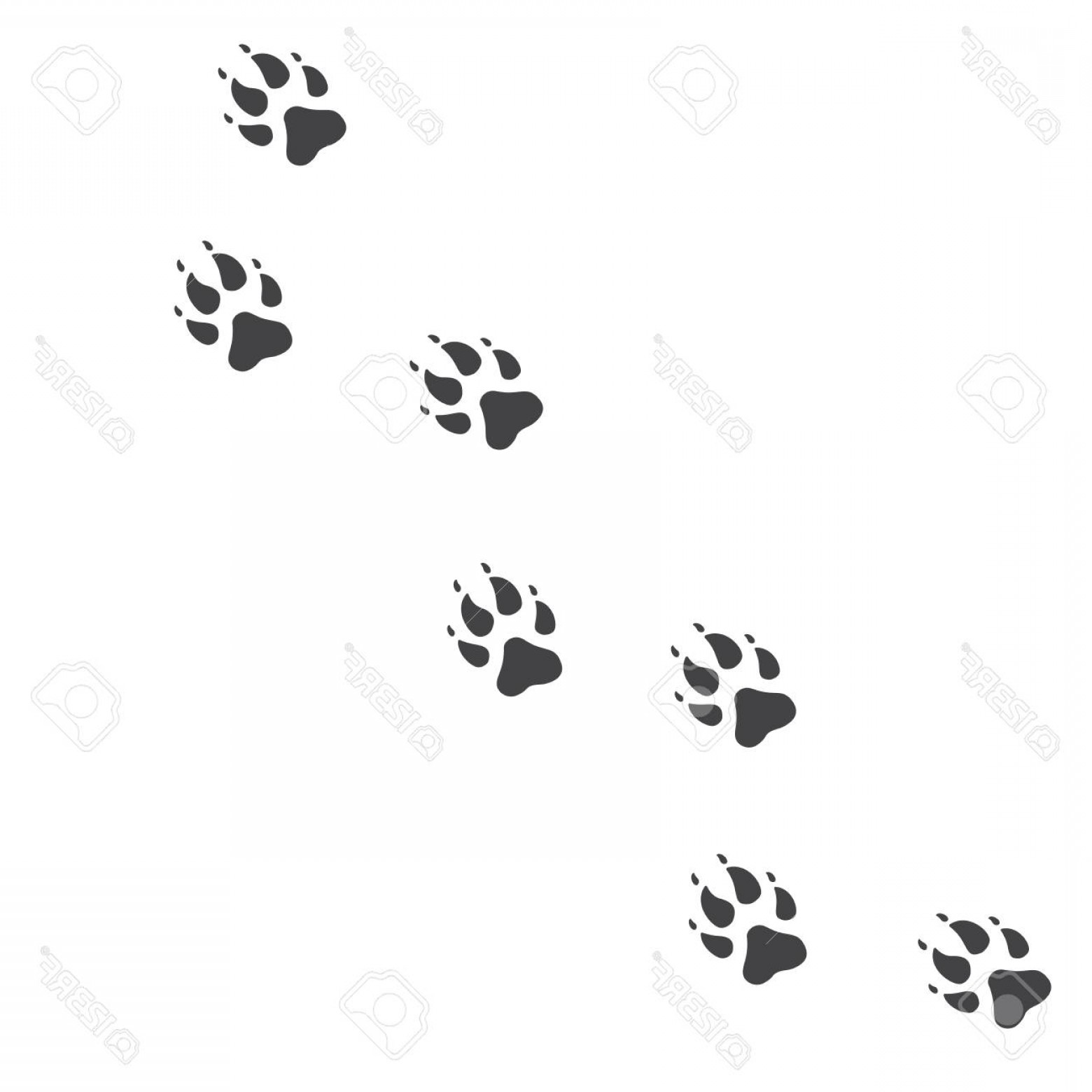 1560x1560 Photostock Vector Vector Illustration Wolf Paw Prints Track Icon
