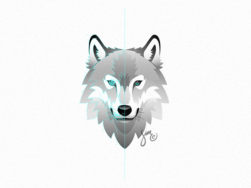 800x600 Wolf Vector By Simc