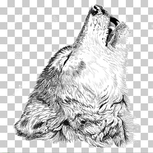 310x311 Page 2 758 Vector Wolf Png Cliparts For Free Download Uihere