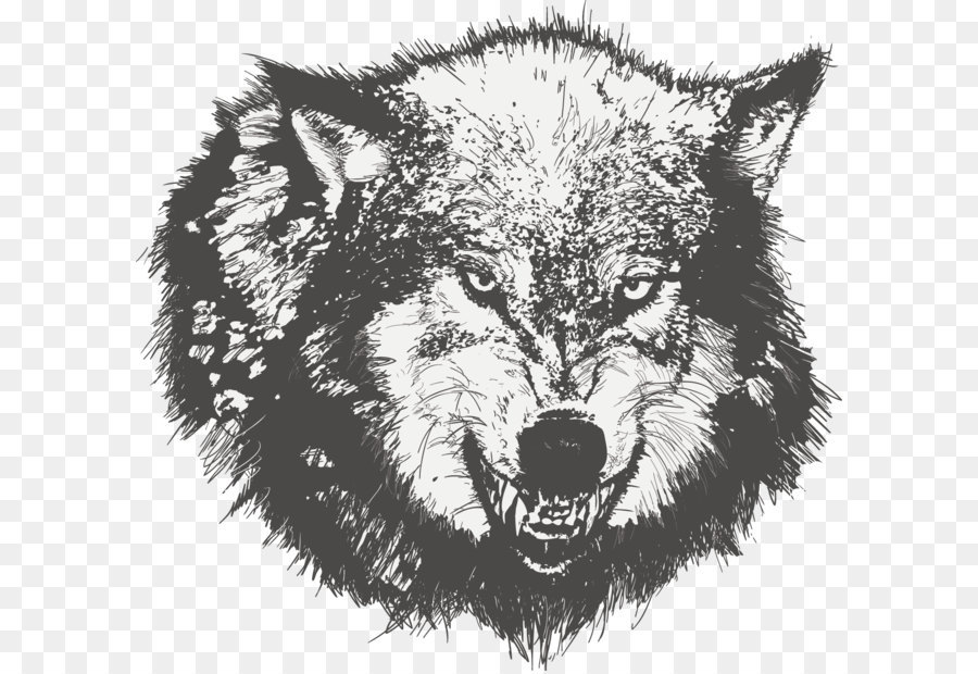 900x620 Dog Drawing Black Wolf Sketch