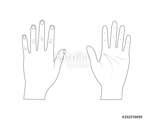500x417 Woman Hands.back Of The Hand.palm Hand. Outline.vector