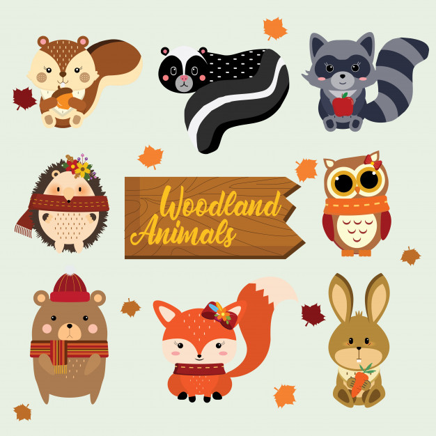 626x626 Woodland Animals Vector Premium Download