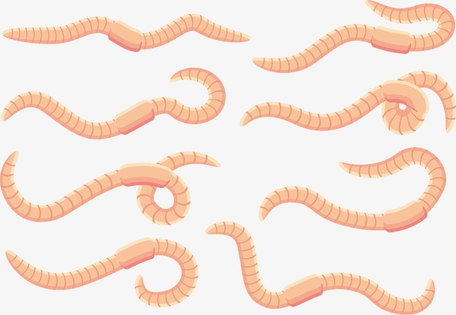 650x449 Vector Cartoon Worm Earthworm, Cartoon Clipart, Worm Clipart
