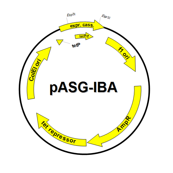 591x591 Stargate Acceptor Vector Pasg Ibawt2 Iba Lifesciences