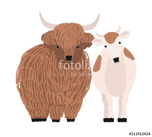 500x451 Pair Of Yak And Cow Isolated On White Background. Portrait Of Pair