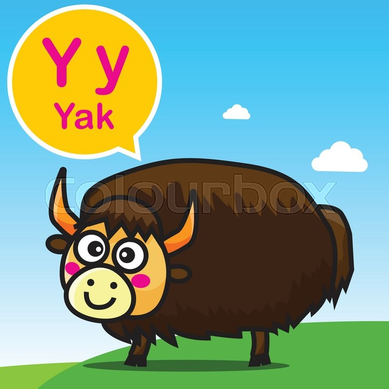 800x800 Y Yak Animal Cartoon And Alphabet For Children To Learning Vector