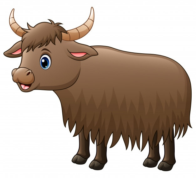 626x568 Yak Vectors, Photos And Psd Files Free Download