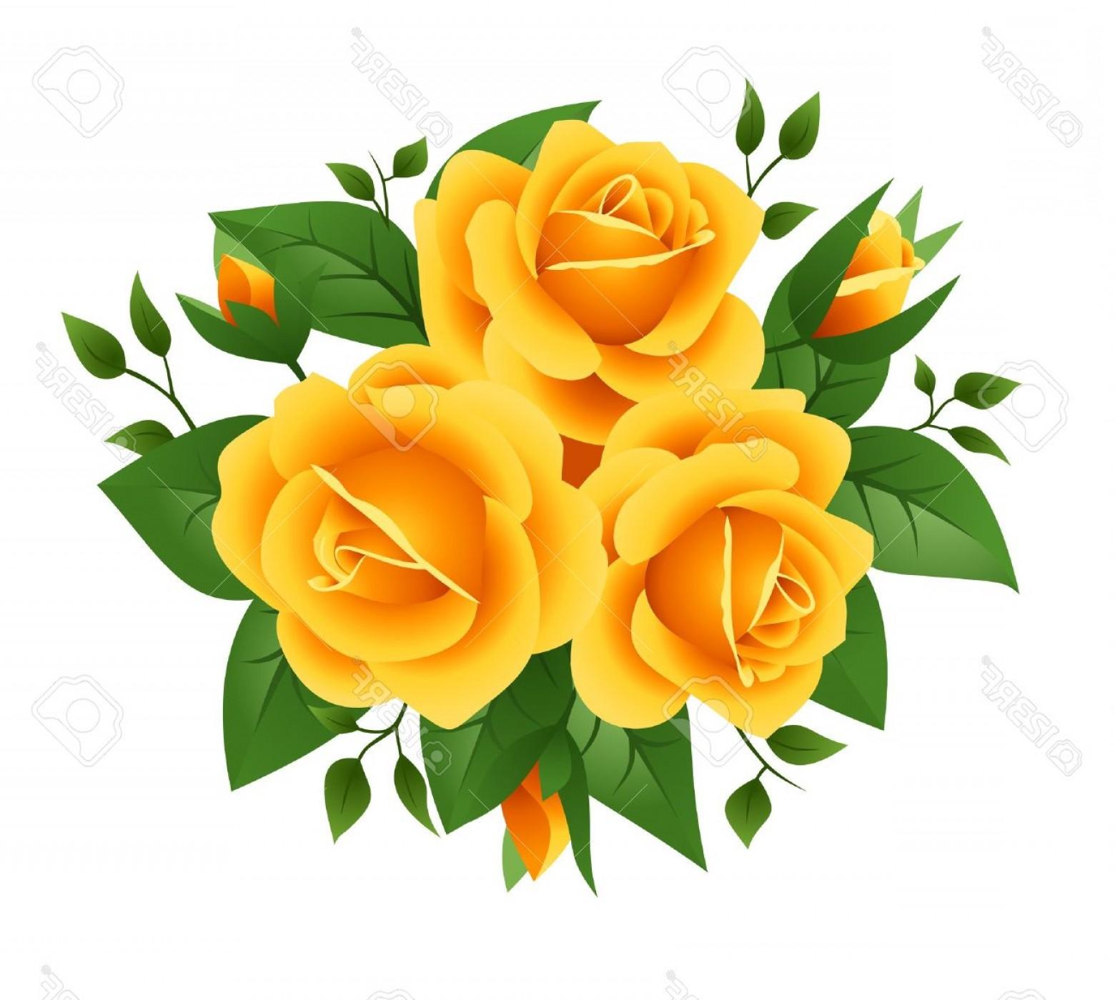 1560x1400 Photothree Yellow Roses Vector Illustration Arenawp