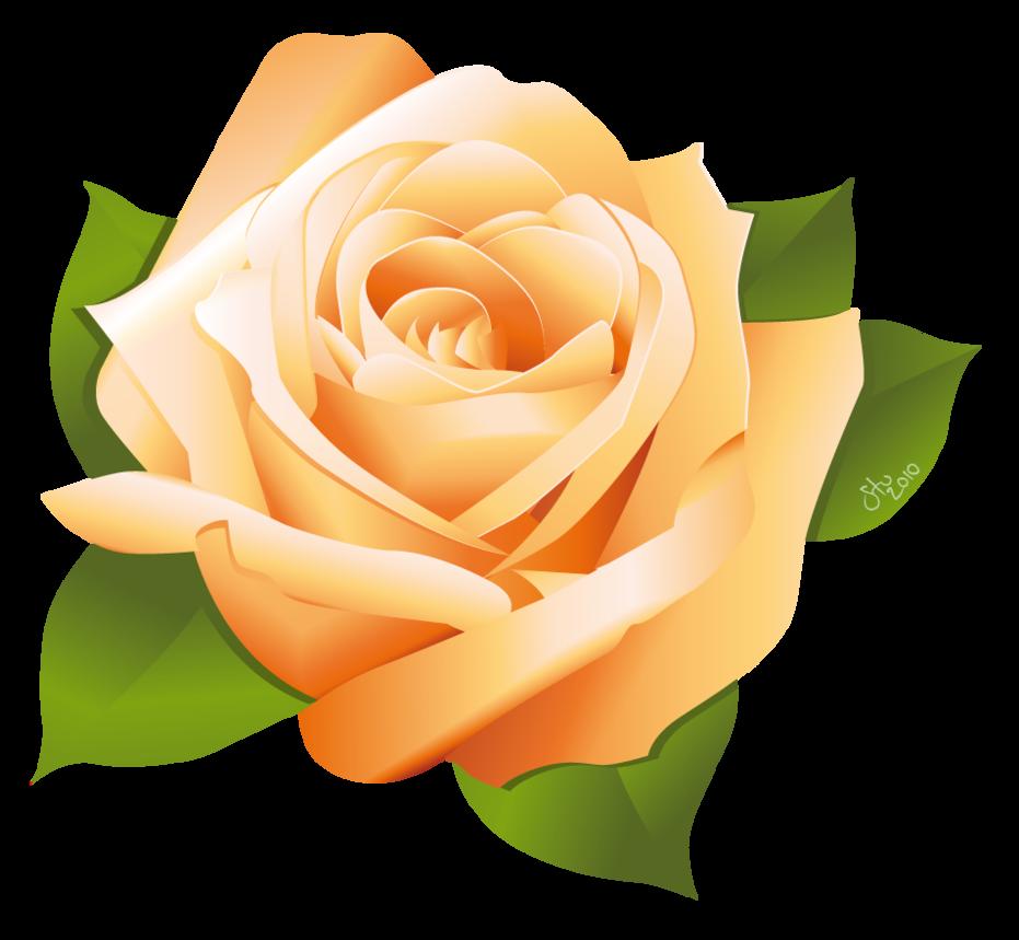 931x859 Rose Vector By Stoobainbridge Free Vectors Rose