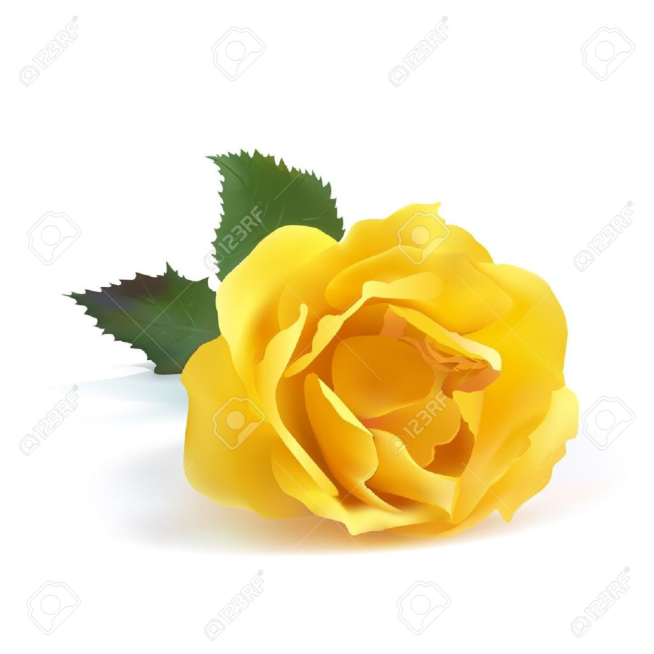 1300x1300 Single Yellow Rose Flower Images