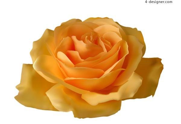 600x411 4 Designer Vivid Yellow Rose Vector Material