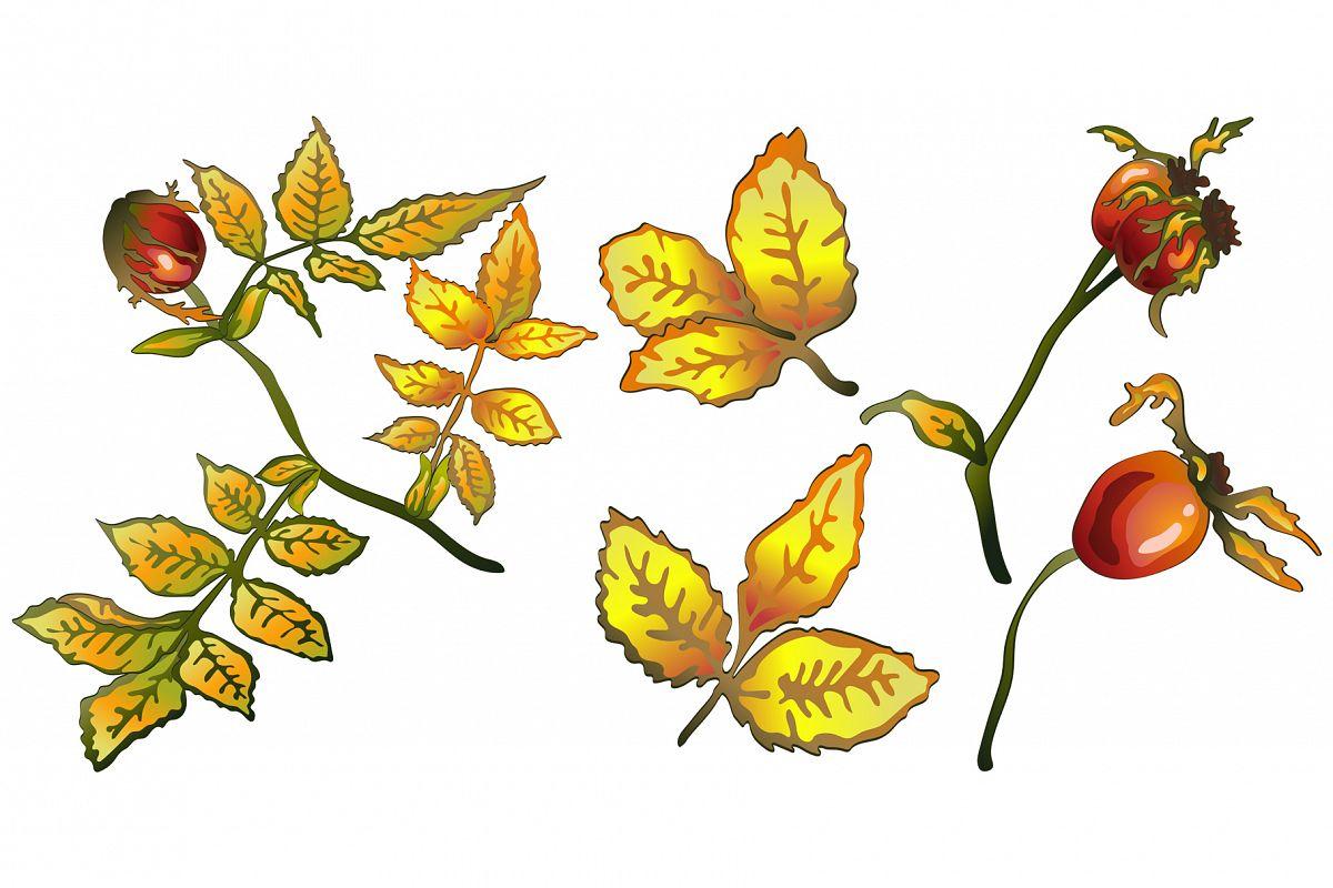 1200x800 Vector Autumn Yellow Rose Hip Plant Png Set