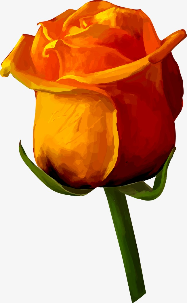 650x1055 Yellow Rose, Rose Vector, Rose Png And Vector For Free Download
