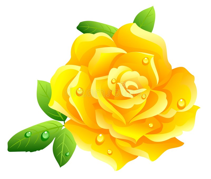 800x681 Yellow Rose Art Desktop Backgrounds