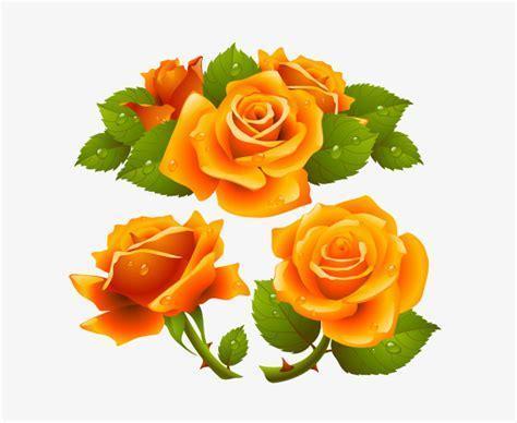 474x388 Yellow Rose Roses