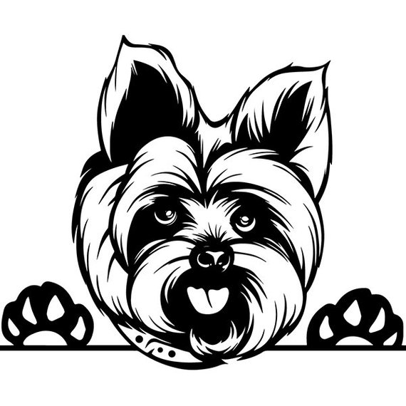 Yorkshire Terrier 1 Dog Breed K