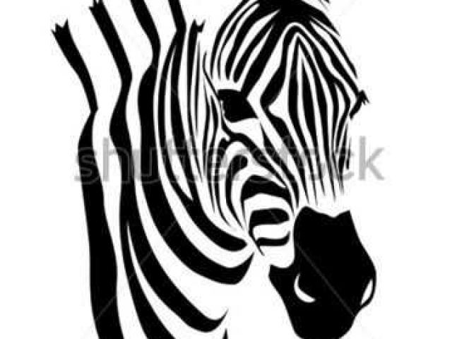 The Best Free Zebra Vector Images Download From 272 Free Vectors Of