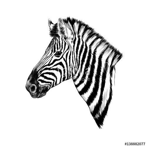 500x500 A Zebra Head Profile Sketch Vector Stock Image And Royalty Free