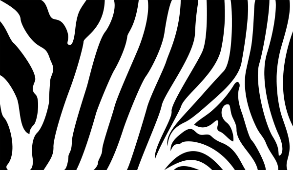 600x350 Zebra Stripes