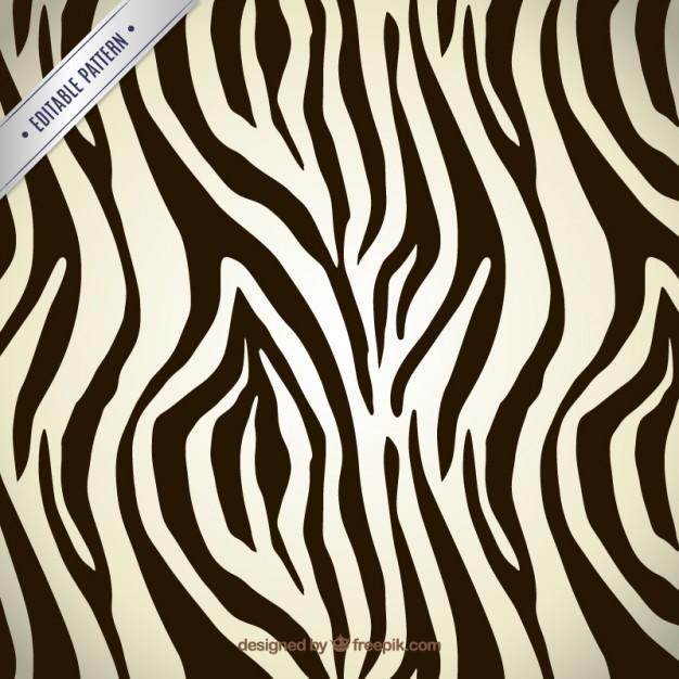 626x626 Zebra Stripes Vectors, Photos And Psd Files Free Download