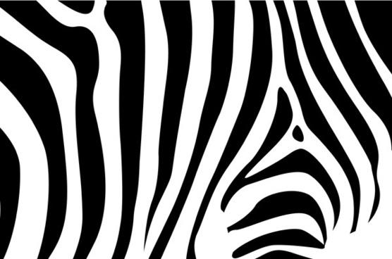 556x368 Zebra Print Vector Free Vector Download (1,678 Free Vector) For