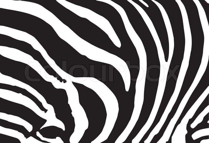 800x548 Vector Abstract Skin Texture Of Zebra Print Pattern Stock Vector