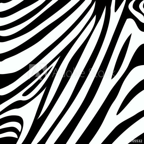 499x500 Zebra Stripe Print Vector