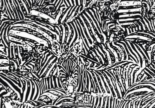 310x217 Free Zebra Print Vector Graphics Free Vectors Ui Download