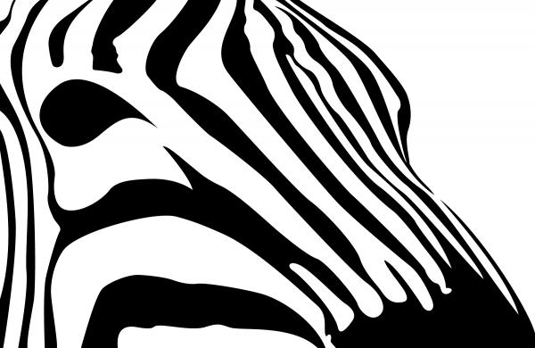 600x390 Zebra Profile