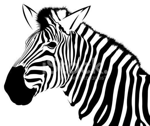 523x440 Profile Of Zebra Vector Stock Vector
