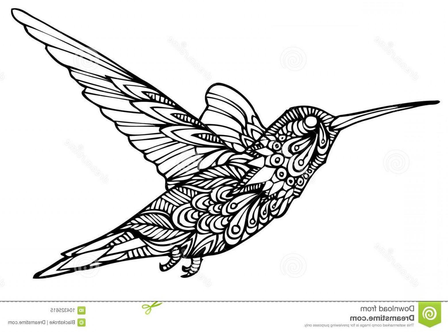 1560x1156 Zentangle Hummingbird Vector Zentangle Vector File Authentic